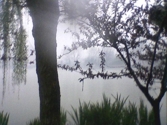 濠河/岸边/春雨|雾蒙 kylin|fisher