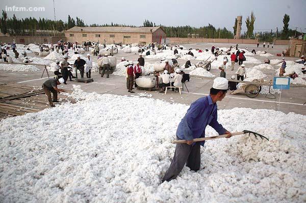 新疆农民与纽约期交所——棉花探戈